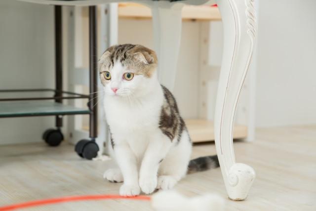 猫じゃらしで遊ばない猫